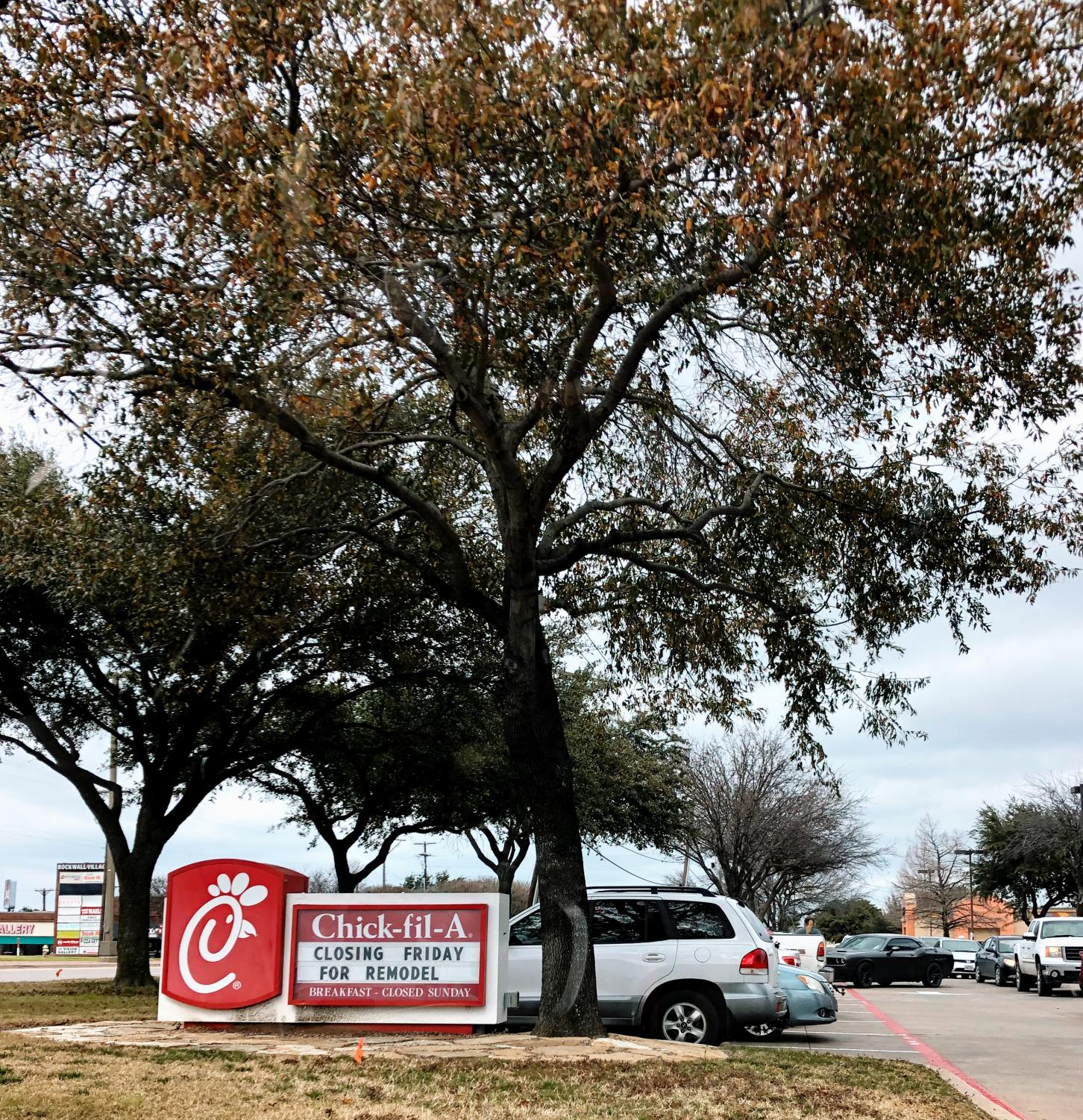 """Why the cow didn't cross the road // Many students choose Chick-Fil-A over other options in Rockwall, and it's been voted Rockwall's favorite Fast-Food Establishment in the Blue Ribbon News 2 years in a row. """"I usually go to Chick-Fil-A four to six times a week,"""" said Sarah Fields."""